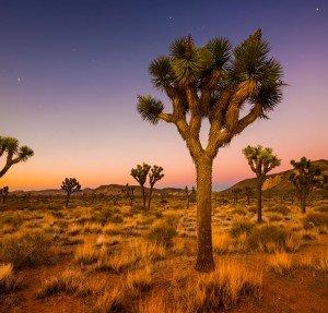 indio-california-joshua-tree-national-park